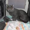 Odin bei seinen Kitten