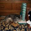 Katzbaum neu, Körbchen neu ... besser auf dem Teppich liegen.