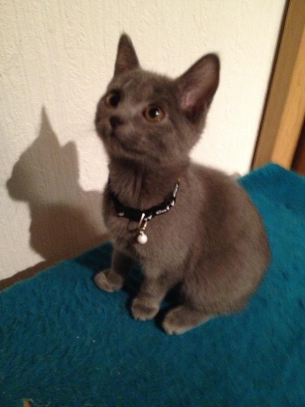 Kamoi im Alter von 3 Monaten und die ersten Minuten im neuen Zuhause.