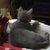 Odin liebt Doku's im Fernsehen schauen