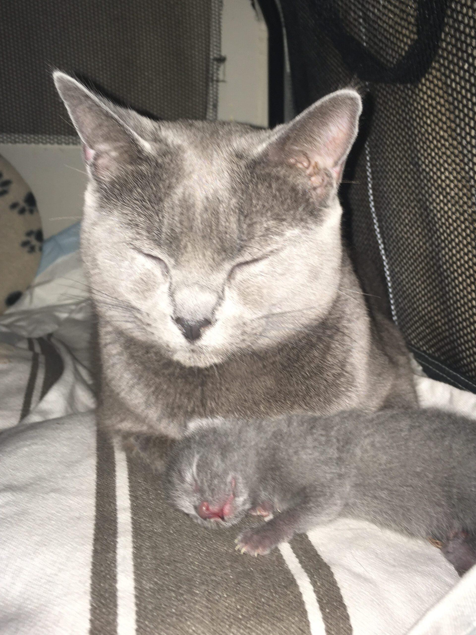 Mutter Kamoi und Sohn Benjamin (2 Tage alt)